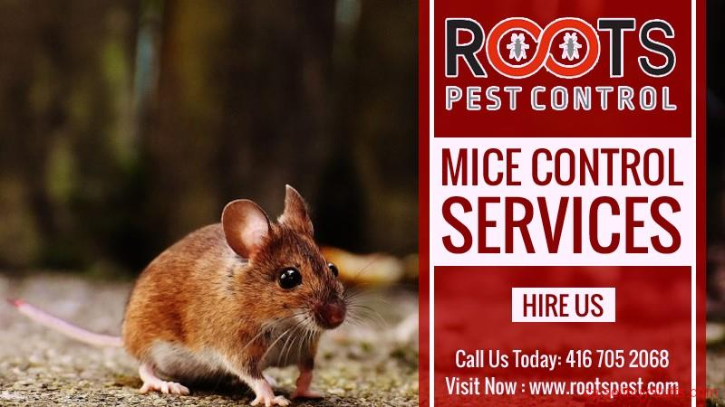 second hand/new: Mice and Rat Control | Roots Pest Control