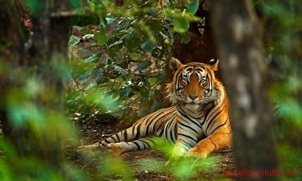 second hand/new: Enjoy Golden Triangle Tour with Tiger Safari