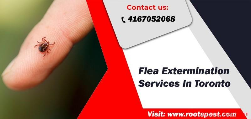 second hand/new: Best Flea Extermination In Toronto | Root Pest Control